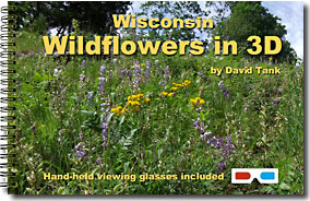 Wisconsin Wildflowers in 3D cover
